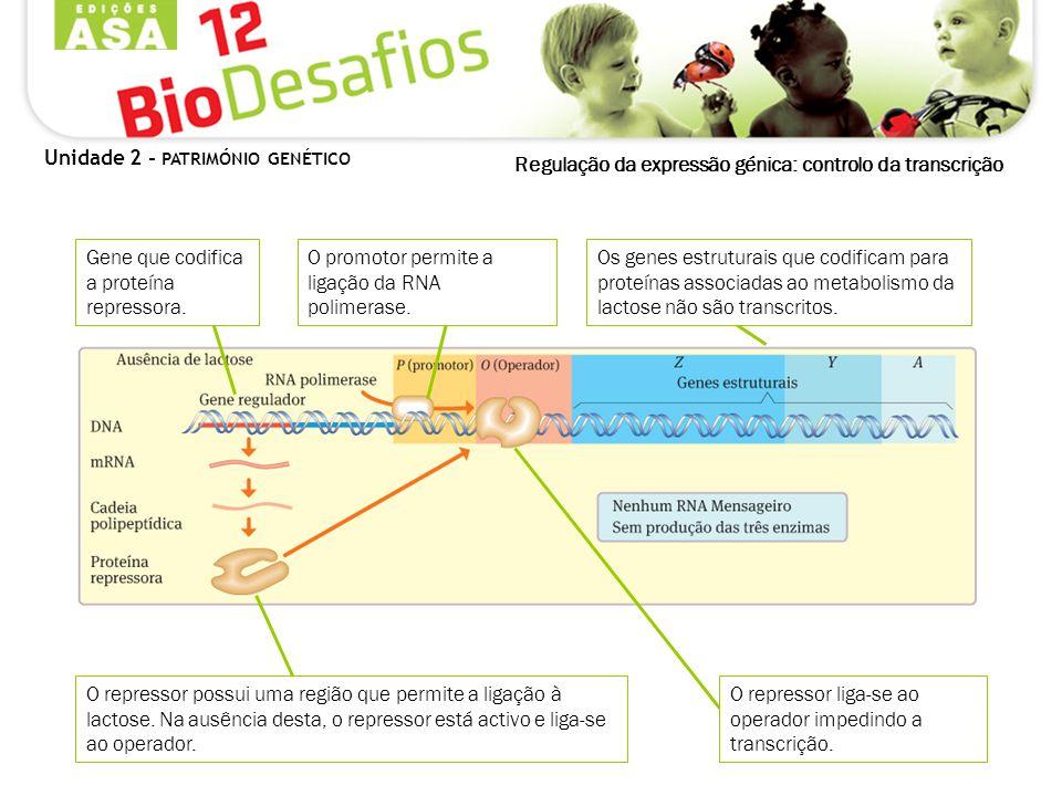 Regulação da expressão génica: controlo da transcrição Unidade 2 - PATRIMÓNIO GENÉTICO O repressor possui uma região que permite a ligação à lactose.