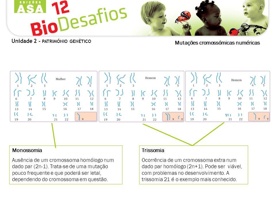 Mutações cromossómicas numéricas Monossomia Ausência de um cromossoma homólogo num dado par (2n-1). Trata-se de uma mutação pouco frequente e que pode