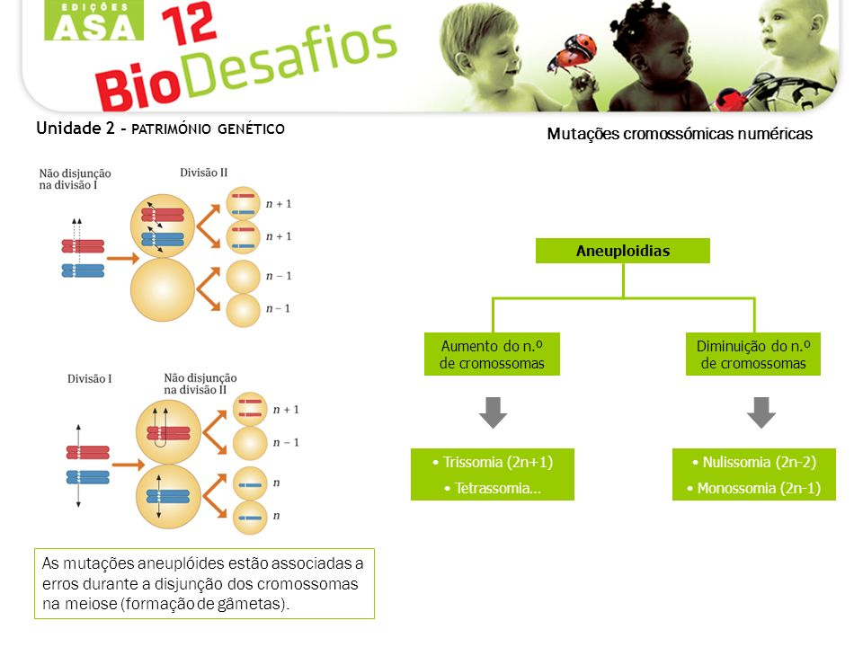 As mutações aneuplóides estão associadas a erros durante a disjunção dos cromossomas na meiose (formação de gâmetas). Unidade 2 - PATRIMÓNIO GENÉTICO