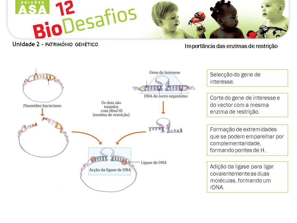 Importância das enzimas de restrição Selecção do gene de interesse. Corte do gene de interesse e do vector com a mesma enzima de restrição. Formação d