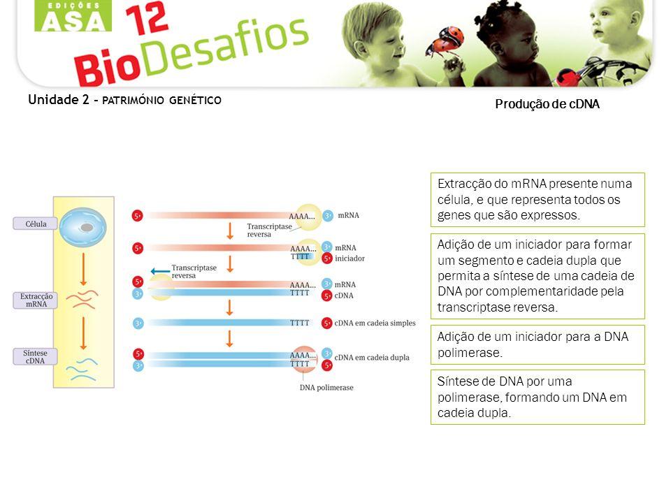 Produção de cDNA Extracção do mRNA presente numa célula, e que representa todos os genes que são expressos. Adição de um iniciador para formar um segm