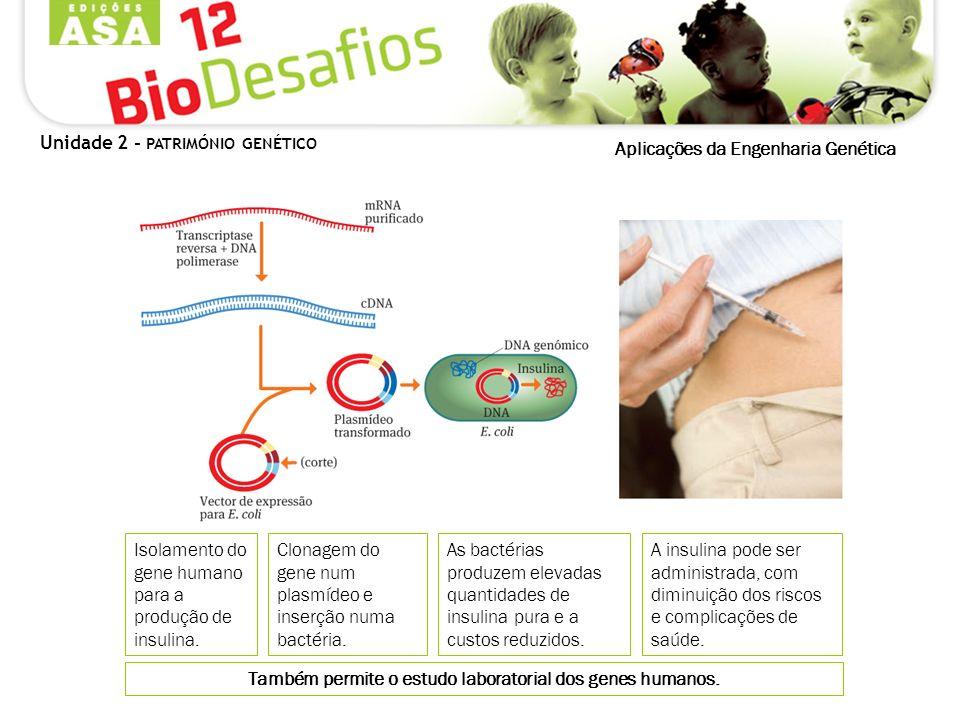 Também permite o estudo laboratorial dos genes humanos. Isolamento do gene humano para a produção de insulina. As bactérias produzem elevadas quantida