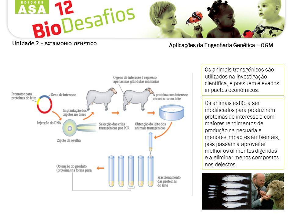 Aplicações da Engenharia Genética – OGM Os animais transgénicos são utilizados na investigação científica, e possuem elevados impactes económicos. Os