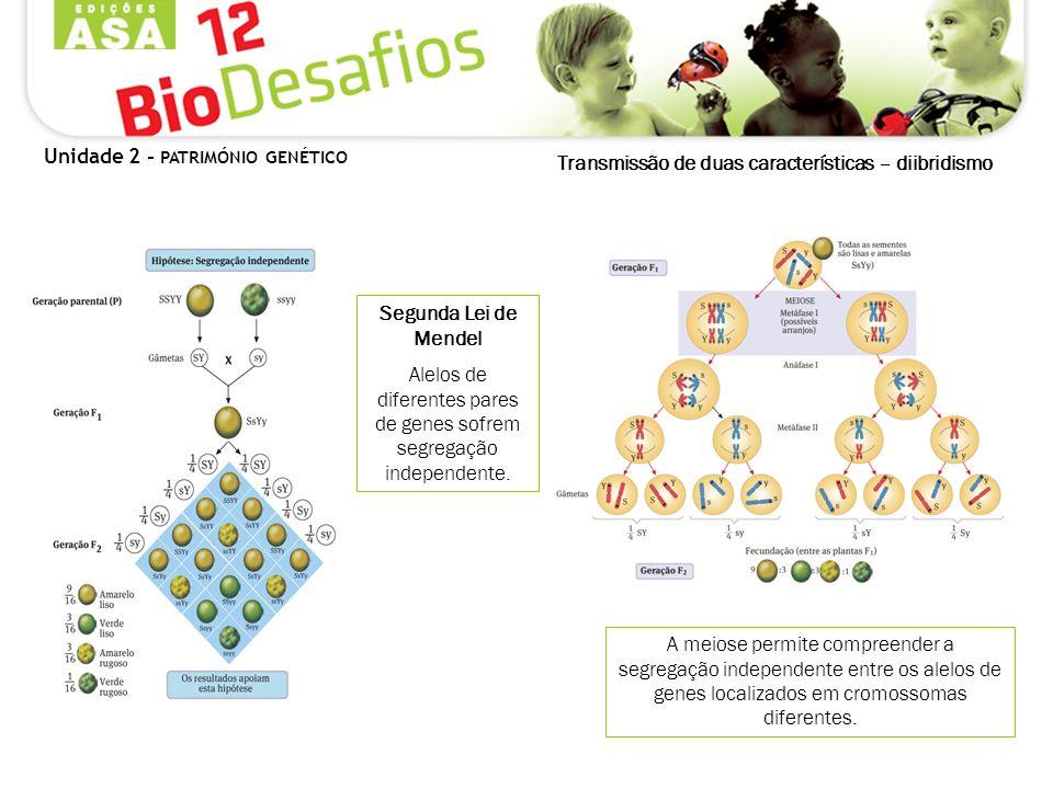Unidade 2 - PATRIMÓNIO GENÉTICO Transmissão de duas características – diibridismo A meiose permite compreender a segregação independente entre os alel