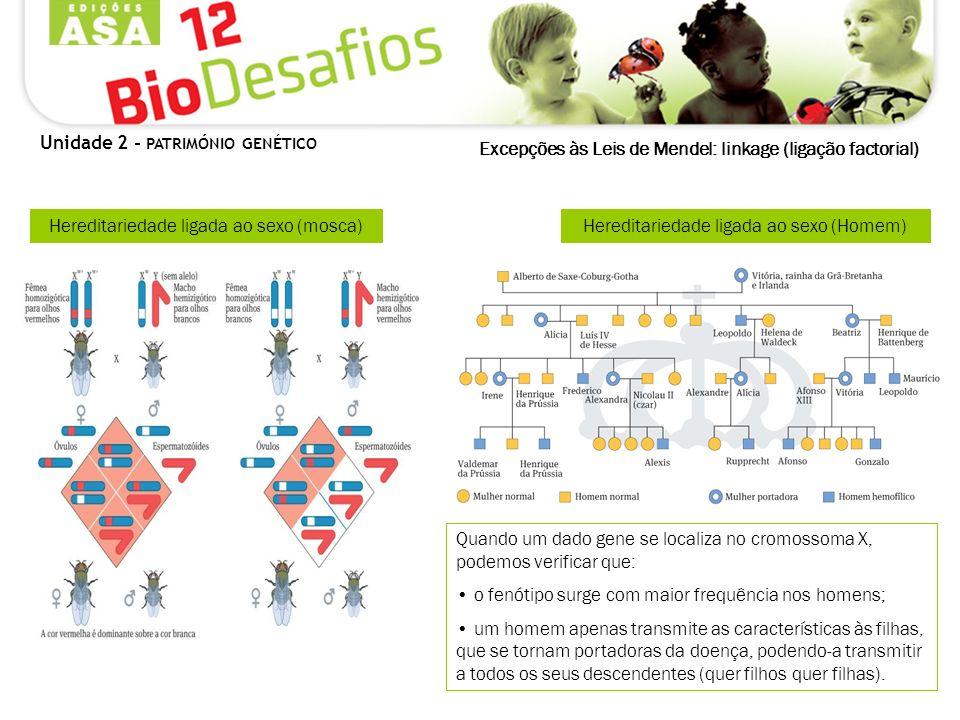 Excepções às Leis de Mendel: linkage (ligação factorial) Quando um dado gene se localiza no cromossoma X, podemos verificar que: o fenótipo surge com