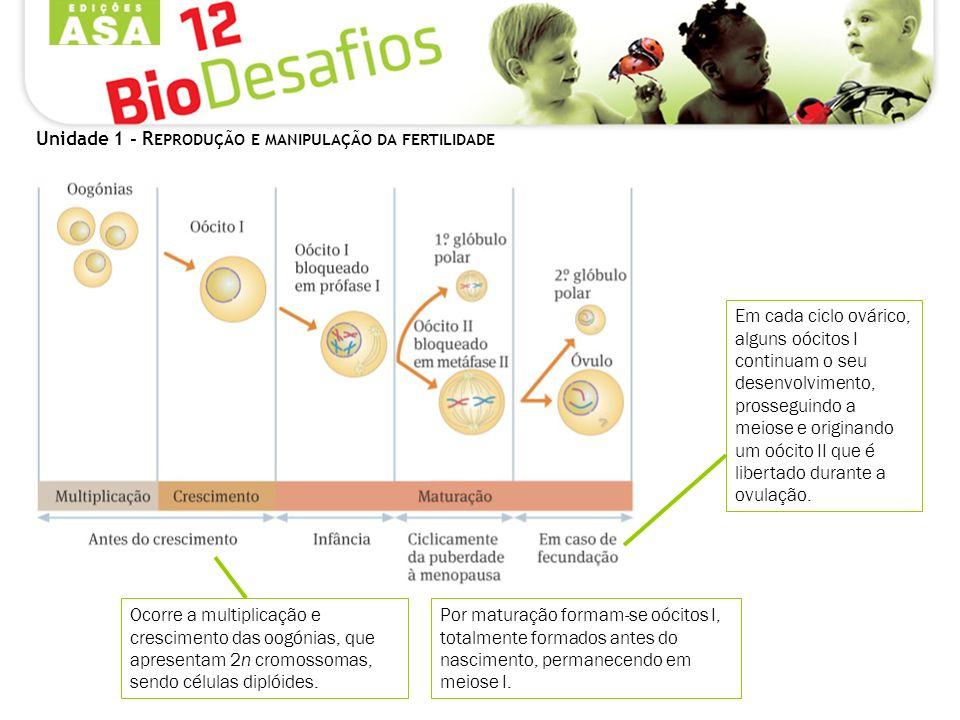 Unidade 1 - R EPRODUÇÃO E MANIPULAÇÃO DA FERTILIDADE Ocorre a multiplicação e crescimento das oogónias, que apresentam 2n cromossomas, sendo células diplóides.
