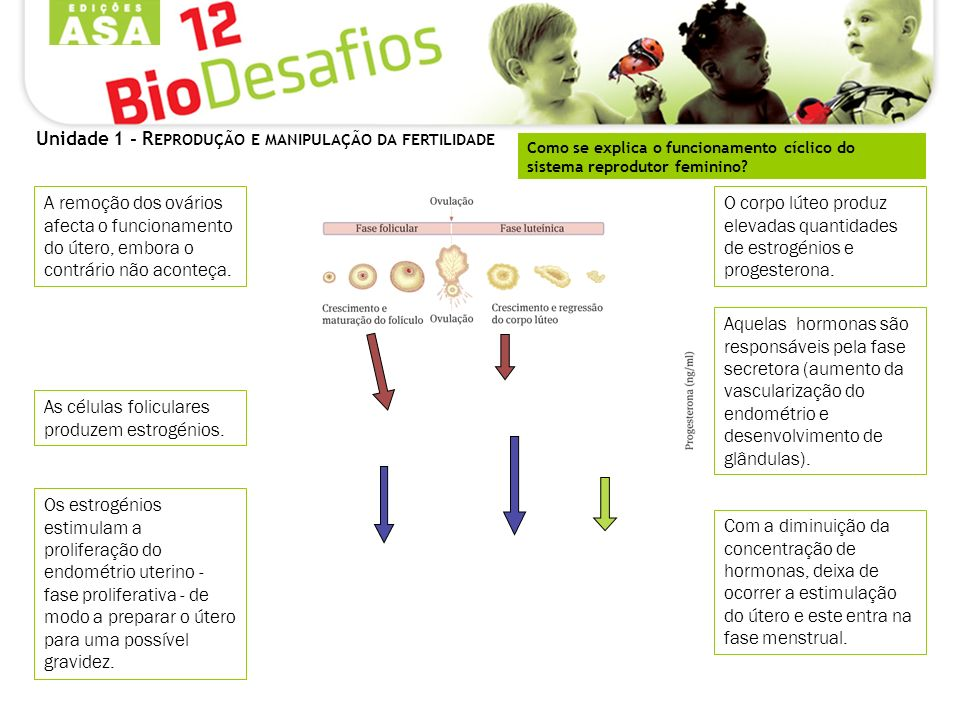 Como se explica o funcionamento cíclico do sistema reprodutor feminino? A remoção dos ovários afecta o funcionamento do útero, embora o contrário não