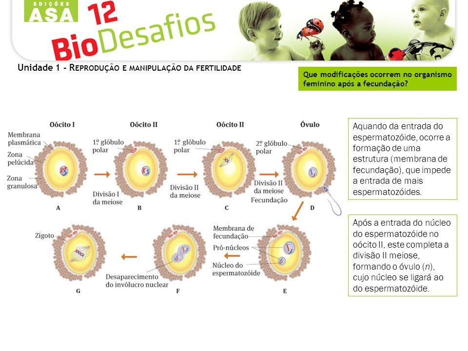 Unidade 1 - R EPRODUÇÃO E MANIPULAÇÃO DA FERTILIDADE Que modificações ocorrem no organismo feminino após a fecundação? Aquando da entrada do espermato