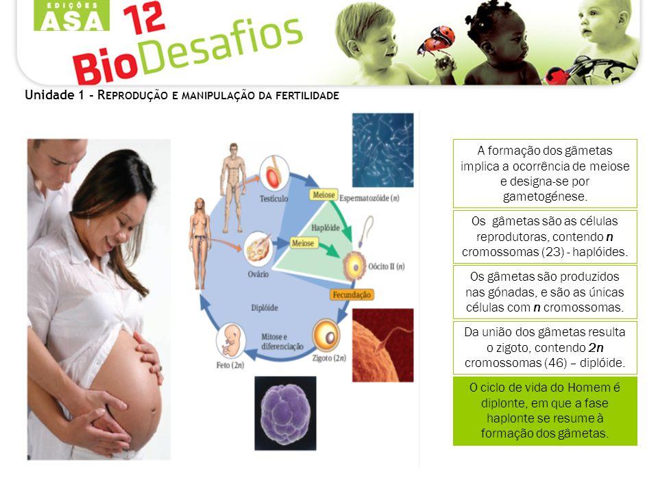 Unidade 1 - R EPRODUÇÃO E MANIPULAÇÃO DA FERTILIDADE Como é constituído o sistema reprodutor masculino.