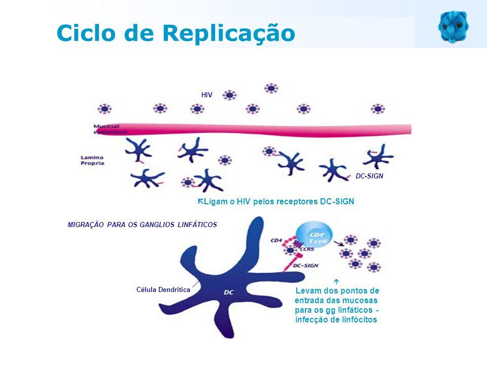 Ligam o HIV pelos receptores DC-SIGN Levam dos pontos de entrada das mucosas para os gg linfáticos - infecção de linfócitos Célula Dendritica HIV DC-S