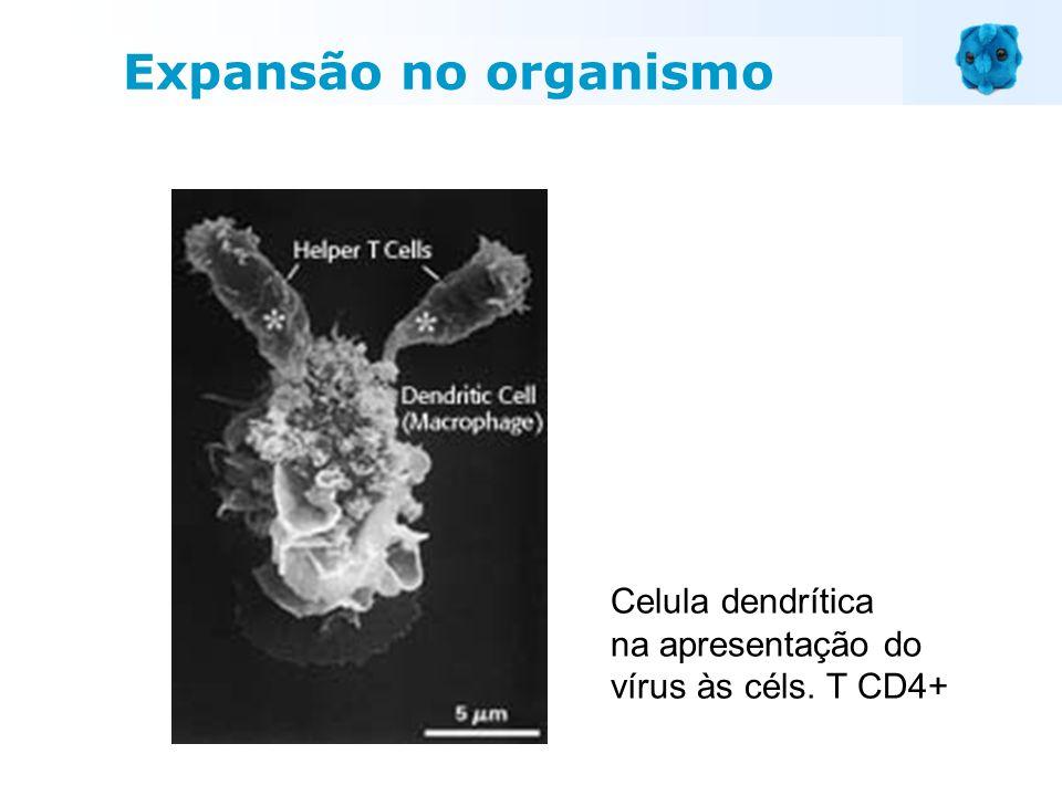 Celula dendrítica na apresentação do vírus às céls. T CD4+ Expansão no organismo