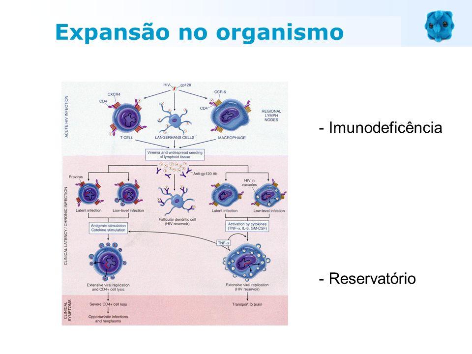 - Imunodeficência - Reservatório Expansão no organismo