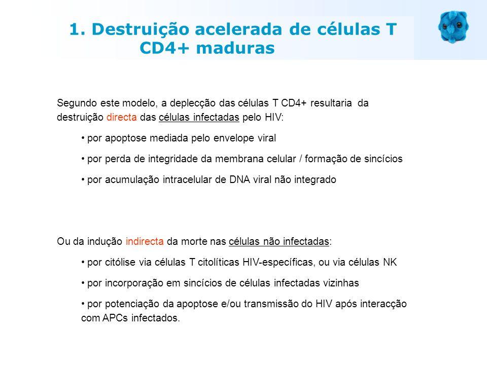 Segundo este modelo, a deplecção das células T CD4+ resultaria da destruição directa das células infectadas pelo HIV: por apoptose mediada pelo envelo