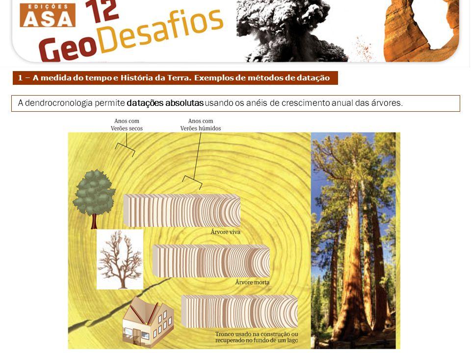 A dendrocronologia permite datações absolutas usando os anéis de crescimento anual das árvores. 1 – A medida do tempo e História da Terra. Exemplos de