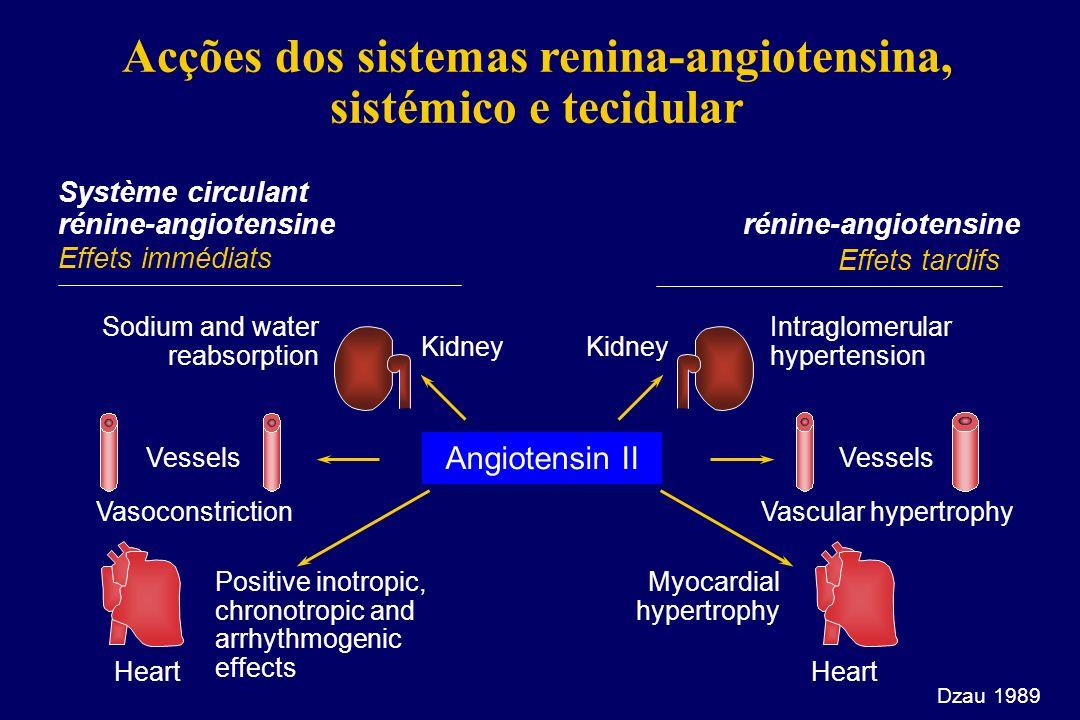 Receptor AT1 da angiotensina II l Vasoconstrição directa l Activação do simpático l Libertação de ET1 l Disfunção endotelial l Crescimento celular l R