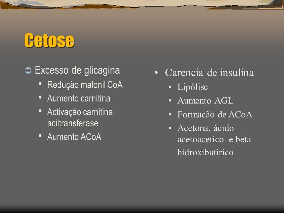 Diabetic honeymoon Stress agudo Cetoacidose Diabetes clinica Capacidade secretória de insulina 12 1314 anos GENETICA EXTERNA LINF T activados Autoimunidade Destruição cel beta