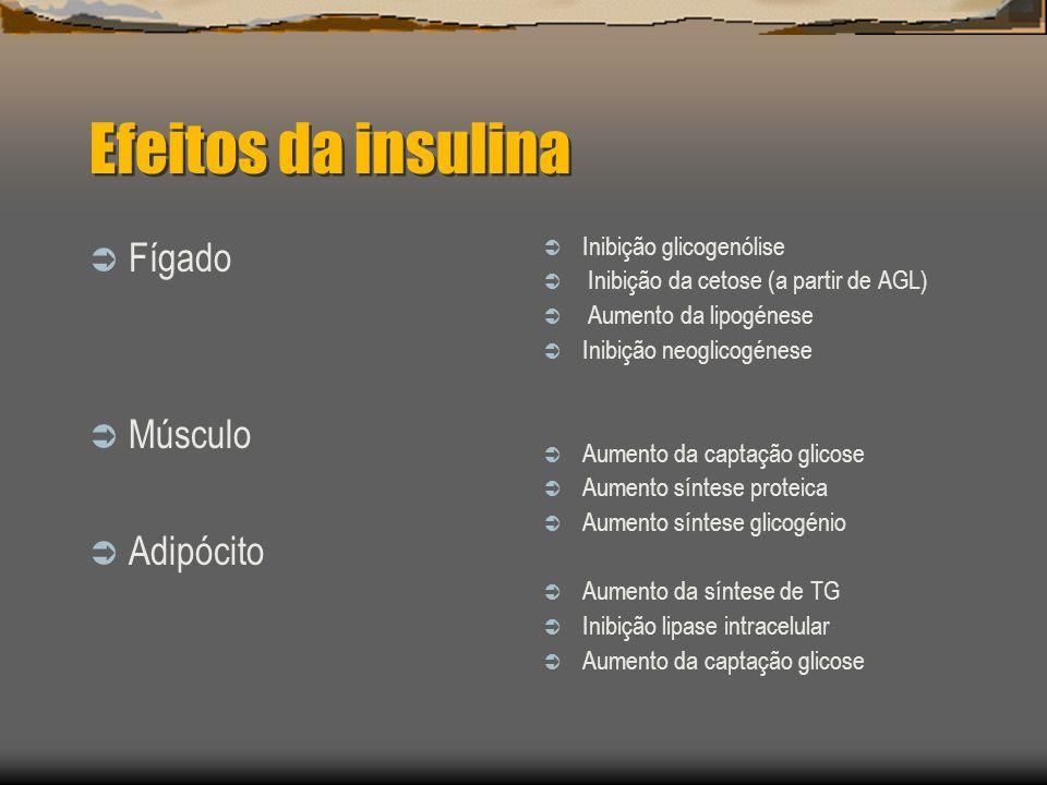 Efeitos da insulina Fígado Músculo Adipócito Inibição glicogenólise Inibição da cetose (a partir de AGL) Aumento da lipogénese Inibição neoglicogénese Aumento da captação glicose Aumento síntese proteica Aumento síntese glicogénio Aumento da síntese de TG Inibição lipase intracelular Aumento da captação glicose
