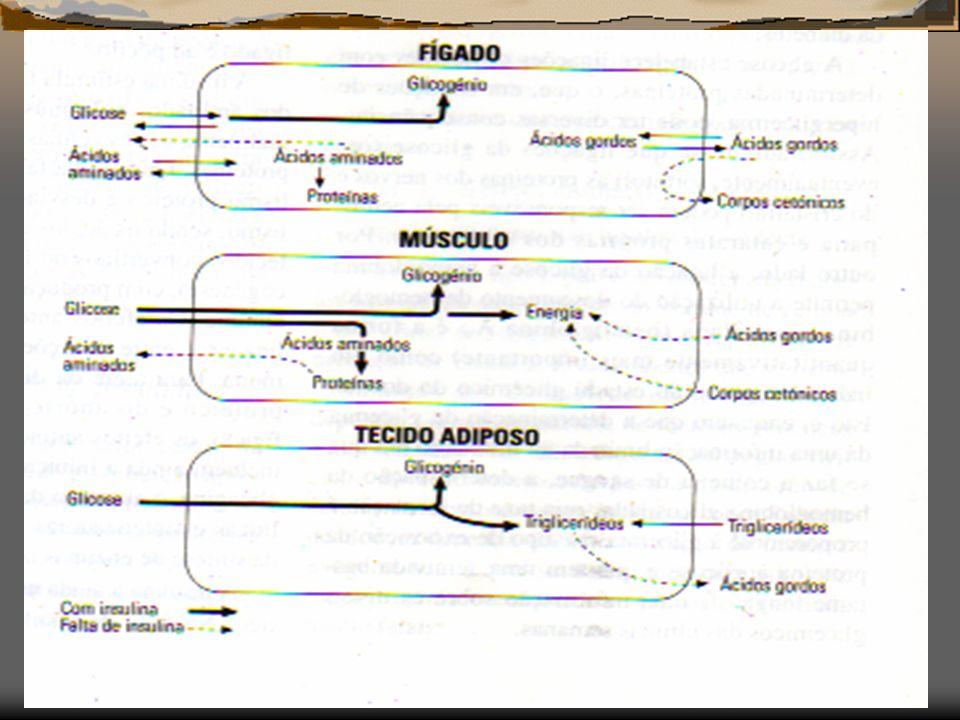 Inibidores alfa-glucosídase Acarbose, miglitol, voglibose Inibição das dissacaridáses Diarreia e flatulencia Diminui absorção metformina