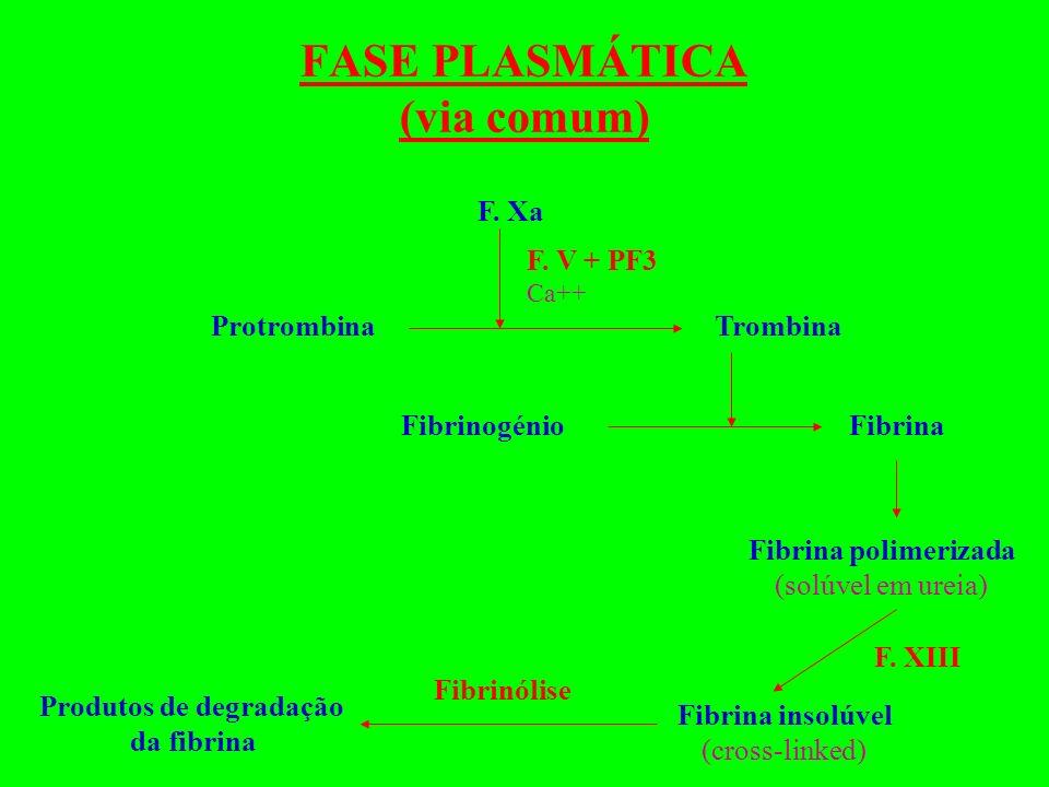 FASE PLASMÁTICA (via comum) F. Xa F. V + PF3 Ca++ TrombinaProtrombina Fibrinogénio Fibrina Fibrina polimerizada (solúvel em ureia) Fibrina insolúvel (