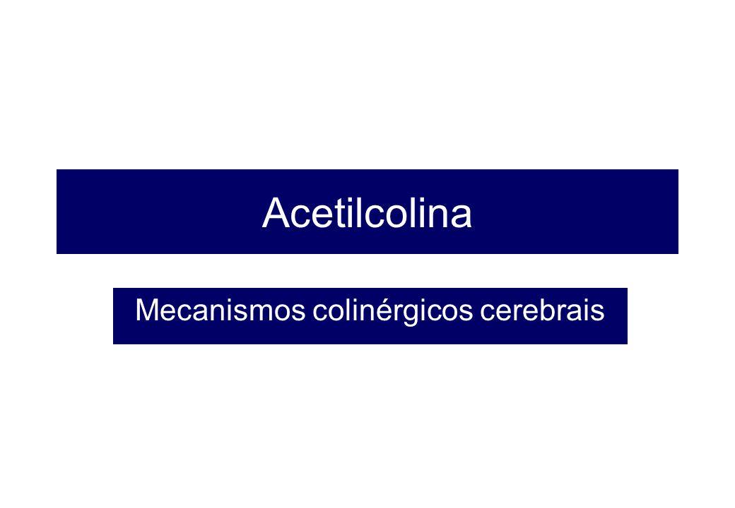 Acetilcolina Mecanismos colinérgicos cerebrais