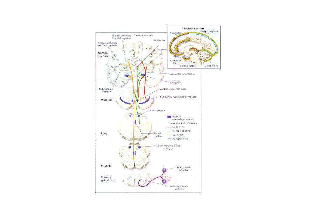 Inibidores da monoamino oxidase Inibidores da captação neuronial de NA e 5-HT Inibidores da captação neuronial de NA Antagonistas adrenérgicos alfa 2 Inibidores da captação neuronial de 5-HT Agonistas parciais 5-HT 1A Antagonistas 5-HT 2 Agonistas adrenérgicos beta