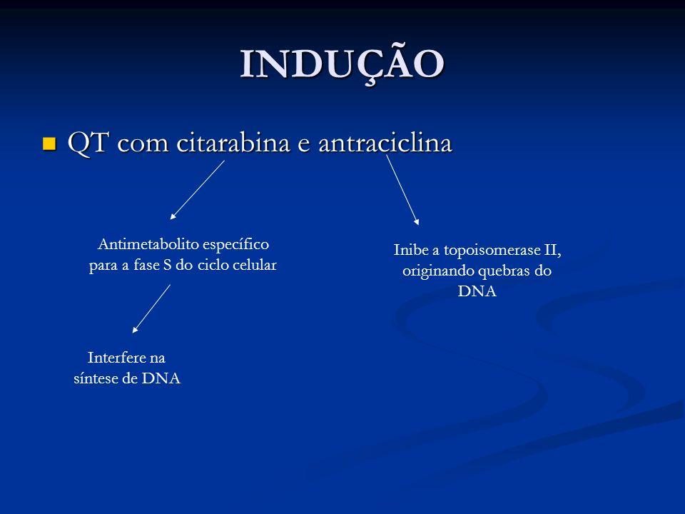INDUÇÃO QT com citarabina e antraciclina QT com citarabina e antraciclina Antimetabolito específico para a fase S do ciclo celular Interfere na síntes