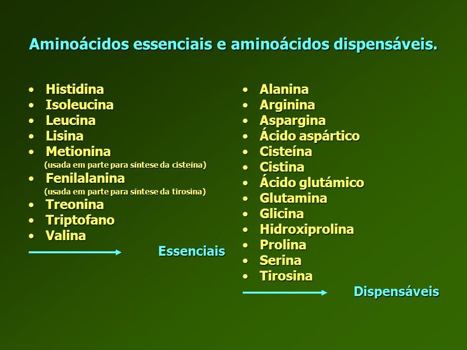 Aminoácidos essenciais e aminoácidos dispensáveis. HistidinaHistidina IsoleucinaIsoleucina LeucinaLeucina LisinaLisina MetioninaMetionina (usada em pa