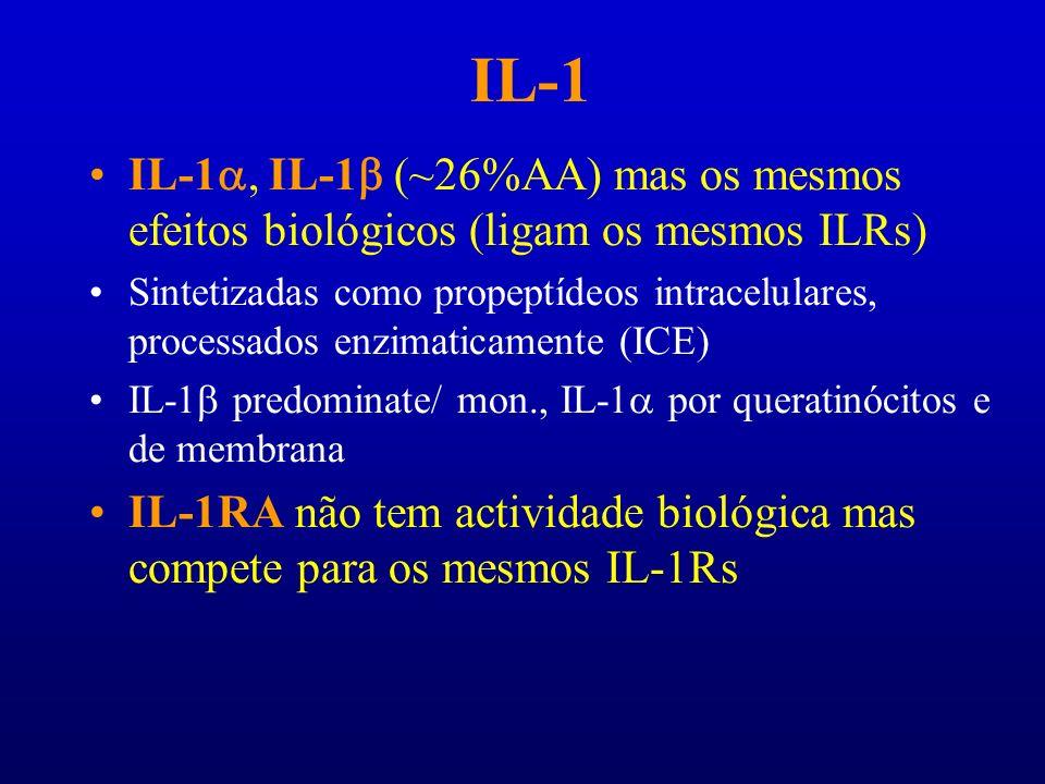 IL-1 IL-1 IL-1 (~26%AA) mas os mesmos efeitos biológicos (ligam os mesmos ILRs) Sintetizadas como propeptídeos intracelulares, processados enzimaticam