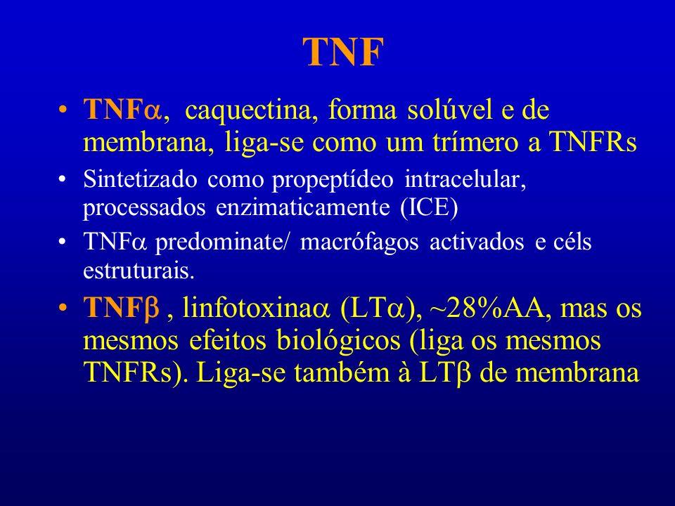 TNF TNF caquectina, forma solúvel e de membrana, liga-se como um trímero a TNFRs Sintetizado como propeptídeo intracelular, processados enzimaticament