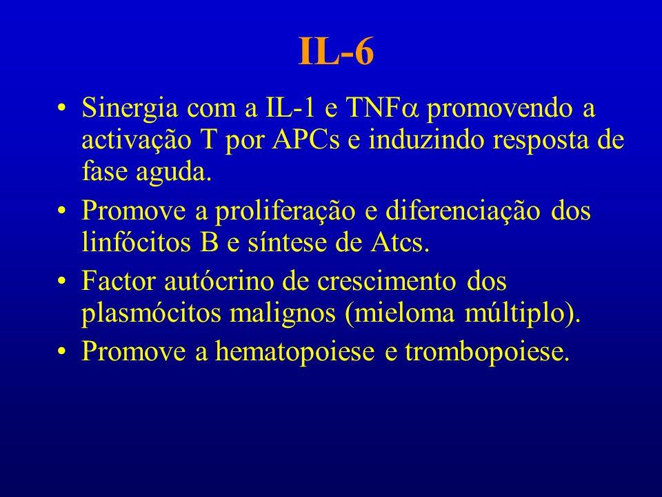 IL-6 Sinergia com a IL-1 e TNF promovendo a activação T por APCs e induzindo resposta de fase aguda. Promove a proliferação e diferenciação dos linfóc