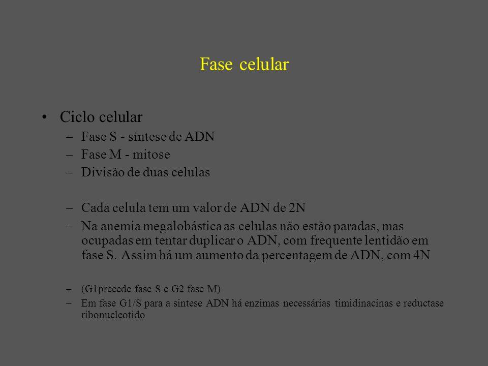 Ciclo Celular Cada celula tem um valor de ADN de 2N Na anemia megalobástica as celulas não estão paradas, mas ocupadas em tentar duplicar o ADN, com frequente lentidão em fase S.