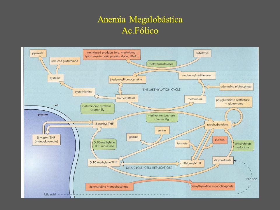 Anemia Megalobástica Ac.Fólico