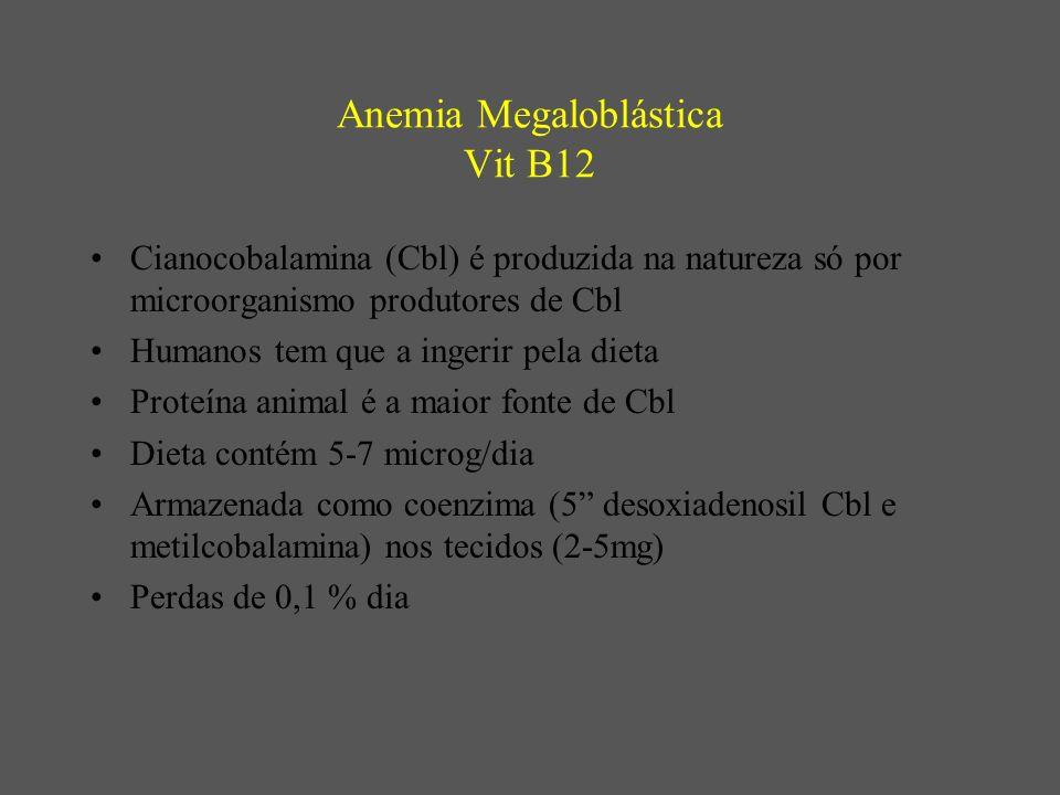 Anemia Megaloblástica Vit B12 Cianocobalamina (Cbl) é produzida na natureza só por microorganismo produtores de Cbl Humanos tem que a ingerir pela dieta Proteína animal é a maior fonte de Cbl Dieta contém 5-7 microg/dia Armazenada como coenzima (5 desoxiadenosil Cbl e metilcobalamina) nos tecidos (2-5mg) Perdas de 0,1 % dia