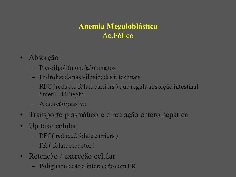 Anemia Megaloblástica Ac.Fólico Absorção –Pteroilpoli(mono)glutamatos –Hidrolizada nas vilosidades intestinais –RFC (reduced folate carriers ) que regula absorção intestinal 5metil-H4Pteglu –Absorção passiva Transporte plasmático e circulação entero hepática Up take celular –RFC( reduced folate carriers ) –FR ( folate receptor ) Retenção / excreção celular –Poliglutamação e interacção com FR