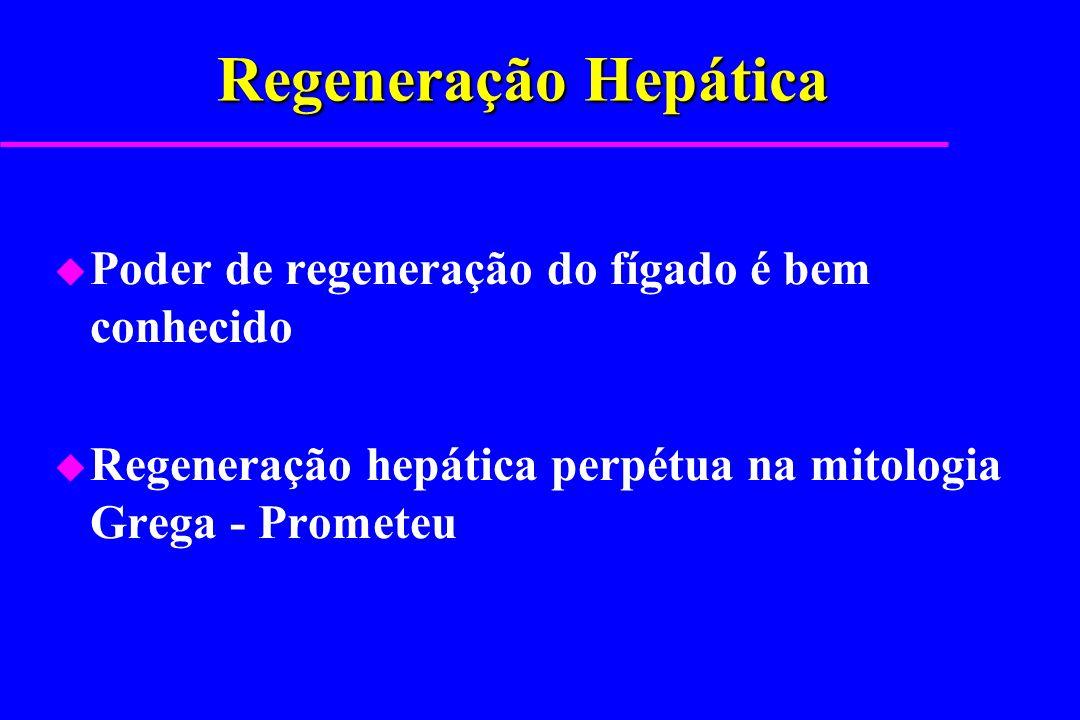 Regeneração Hepática u Poder de regeneração do fígado é bem conhecido u Regeneração hepática perpétua na mitologia Grega - Prometeu