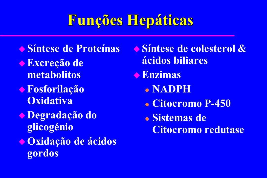 Funções Hepáticas u Síntese de Proteínas u Excreção de metabolitos u Fosforilação Oxidativa u Degradação do glicogénio u Oxidação de ácidos gordos u S