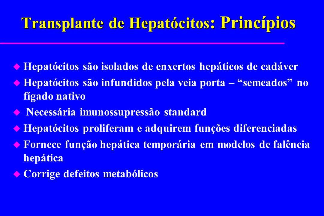 Transplante de Hepatócitos : Princípios u Hepatócitos são isolados de enxertos hepáticos de cadáver u Hepatócitos são infundidos pela veia porta – sem