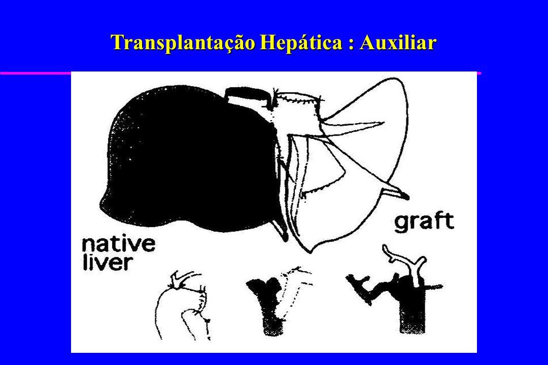 Transplantação Hepática : Auxiliar