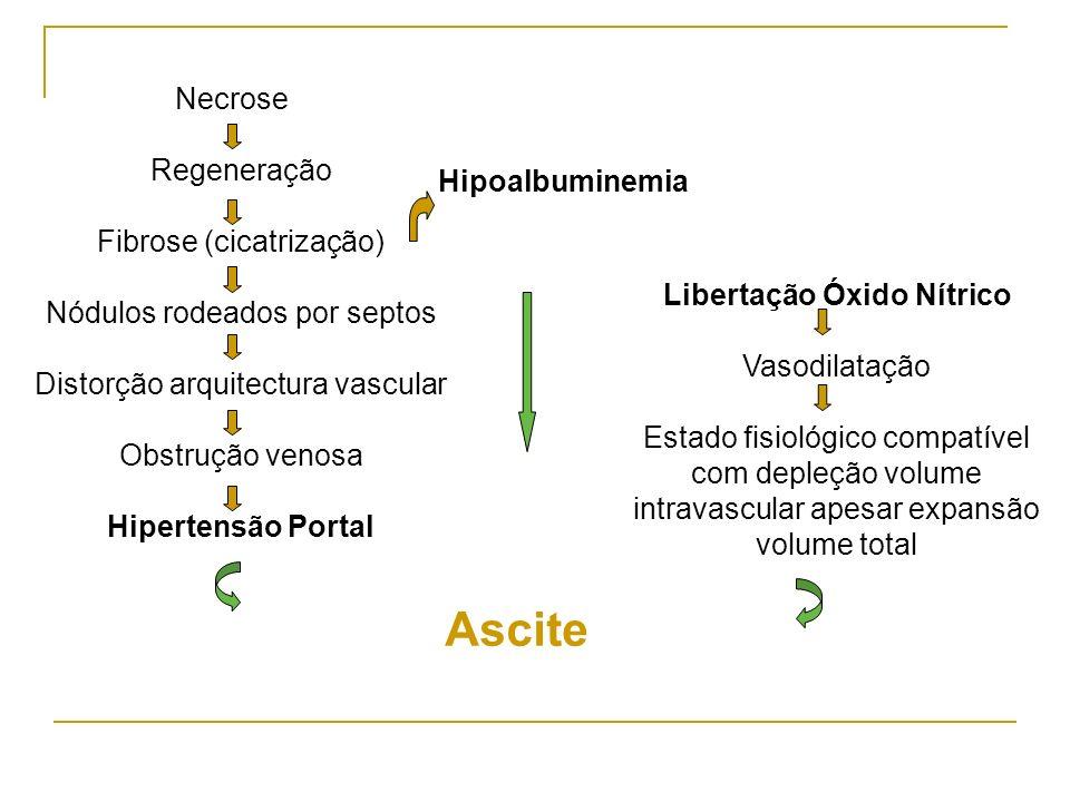 Necrose Regeneração Fibrose (cicatrização) Nódulos rodeados por septos Distorção arquitectura vascular Obstrução venosa Hipertensão Portal Libertação