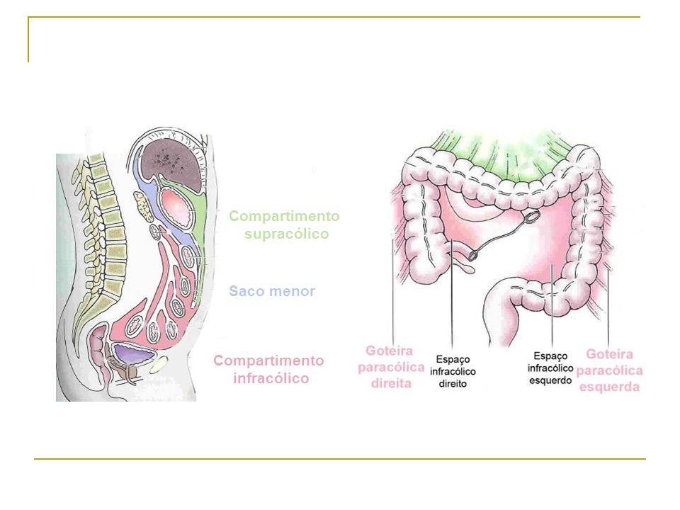 A cavidade peritoneal, normalmente, contém ~100 ml de líquido A partir de 500 mL de líquido acumulado é clinicamente detectável O líquido peritoneal: é um transudado e tem um turnover de 50% por hora é produzido pelos capilares viscerais é drenado pelas vias linfáticas diafragmáticas ASCITE: Grau 1: detectada apenas por ecografia Grau 2: abdómen de batráquio (dilatação dos flancos, com o doente em decúbito dorsal) e sinal da macicez variável, ao exame físico Grau 3: directamente visível, confirmada pelo sinal da onda ascítica