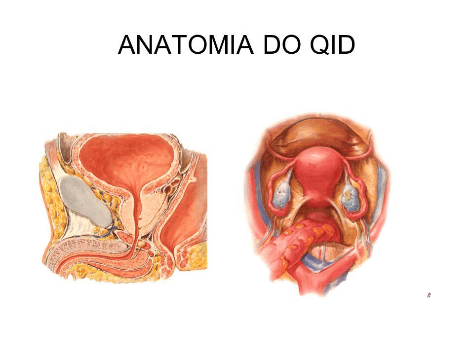 ANATOMIA DO QID