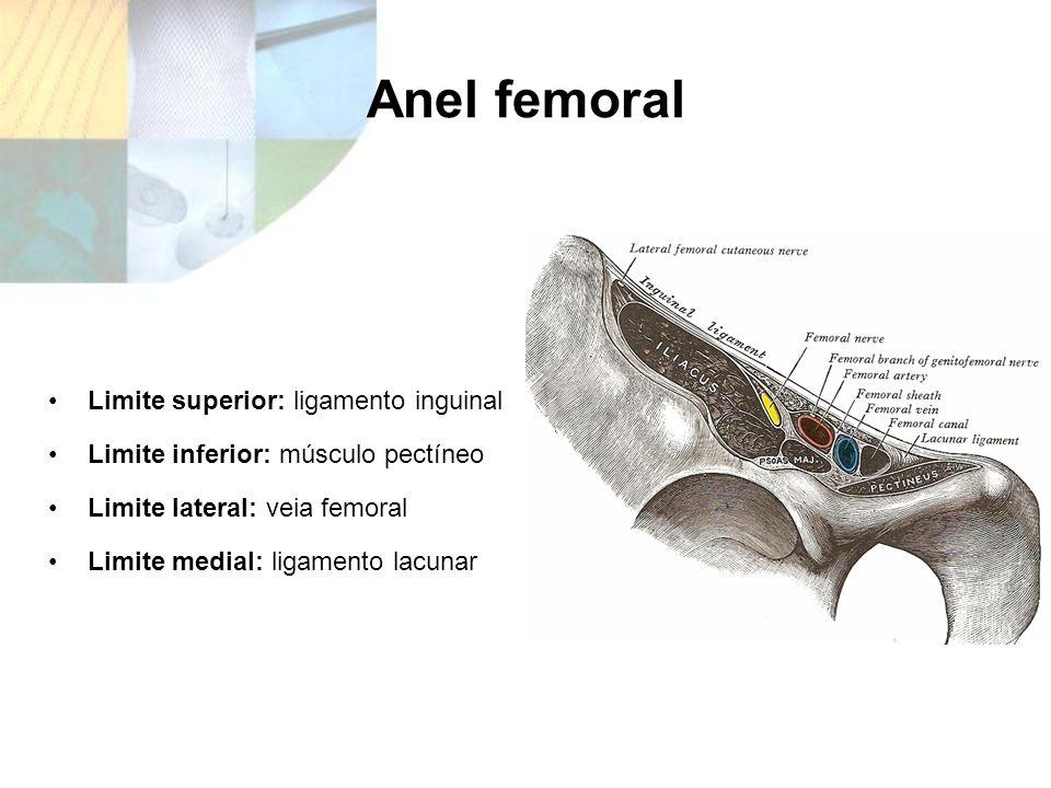 Anel femoral Limite superior: ligamento inguinal Limite inferior: músculo pectíneo Limite lateral: veia femoral Limite medial: ligamento lacunar