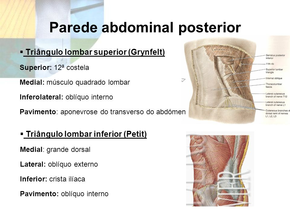 Parede abdominal posterior Triângulo lombar superior (Grynfelt) Superior: 12ª costela Medial: músculo quadrado lombar Inferolateral: oblíquo interno P
