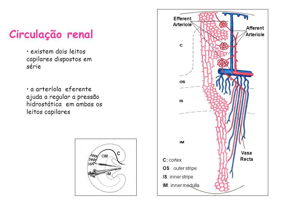 Etapas na produção de urina filtração (função glomerular) reabsorção e secreção (função tubular) 98% do ultrafiltrado é reabsorvido a reabsorção tubular é quantitativamente mais importante do que a secreção tubular na formação de urina, mas a secreção determina a quantidade de iões K+ e H+ que são eliminados