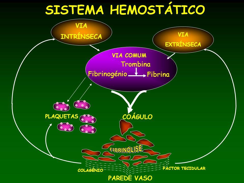 PAREDE VASO COLAGÉNIO FACTOR TECIDULAR COÁGULO PLAQUETAS VIA INTRÍNSECA VIA EXTRÍNSECA VIA COMUM Fibrinogénio Fibrina Trombina SISTEMA HEMOSTÁTICO