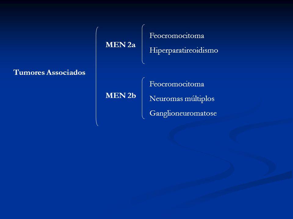 Tumores Associados MEN 2a MEN 2b Feocromocitoma Hiperparatireoidismo Feocromocitoma Neuromas múltiplos Ganglioneuromatose