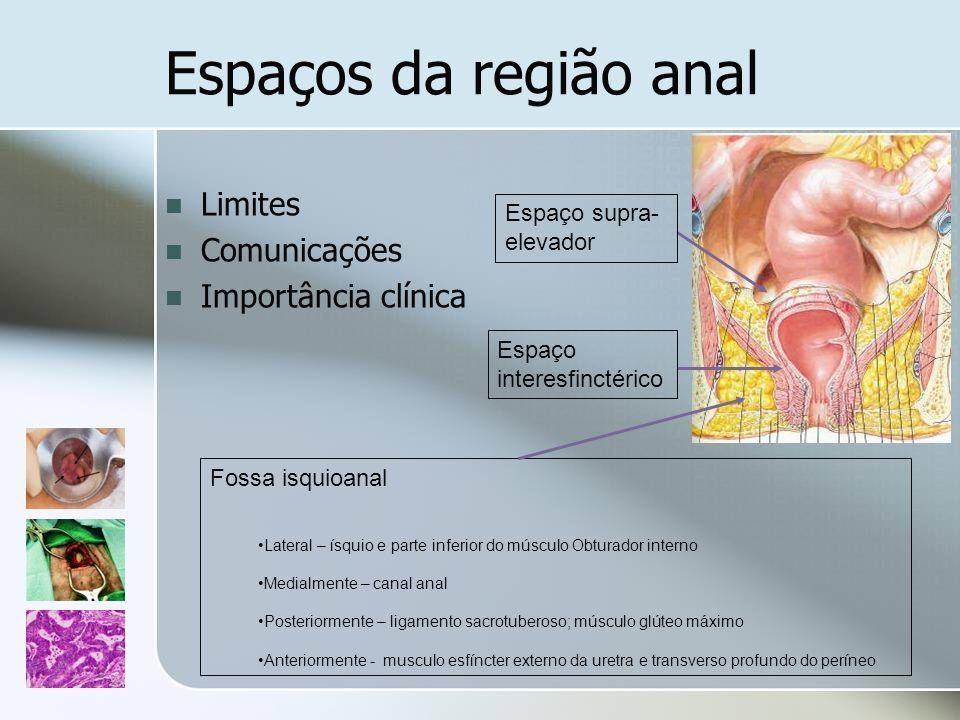 Espaços da região anal Limites Comunicações Importância clínica Fossa isquioanal Lateral – ísquio e parte inferior do músculo Obturador interno Medial