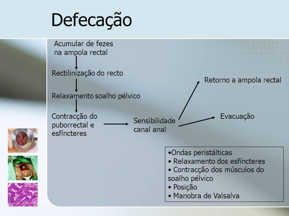 Defecação Acumular de fezes na ampola rectal Rectilinização do recto Relaxamento soalho pélvico Contracção do puborrectal e esfíncteres Sensibilidade