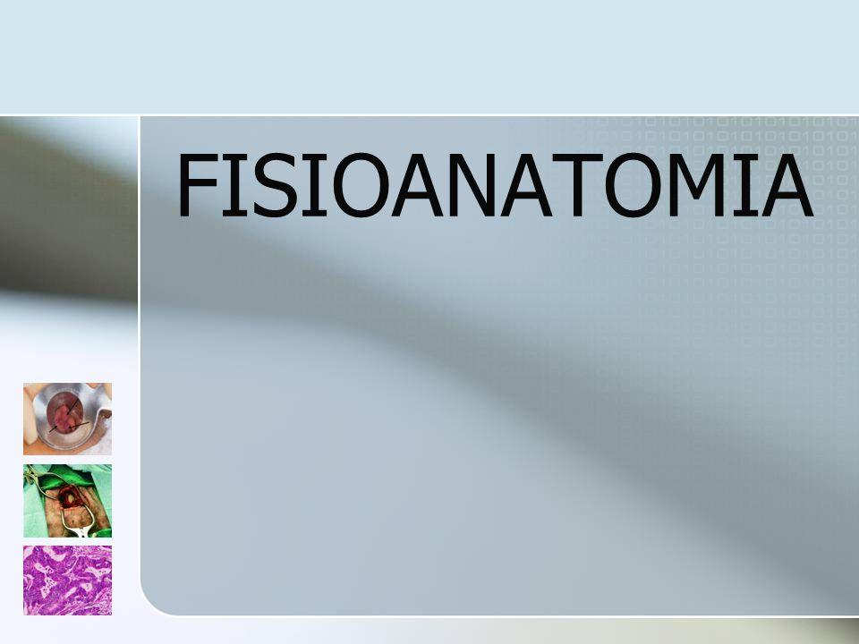 Abordagem do doente Proctológico Exame Físico Exame Proctológico Avaliar necessidade de: Colonoscopia total Técnicas radiológicas especiais Estudos funcionais