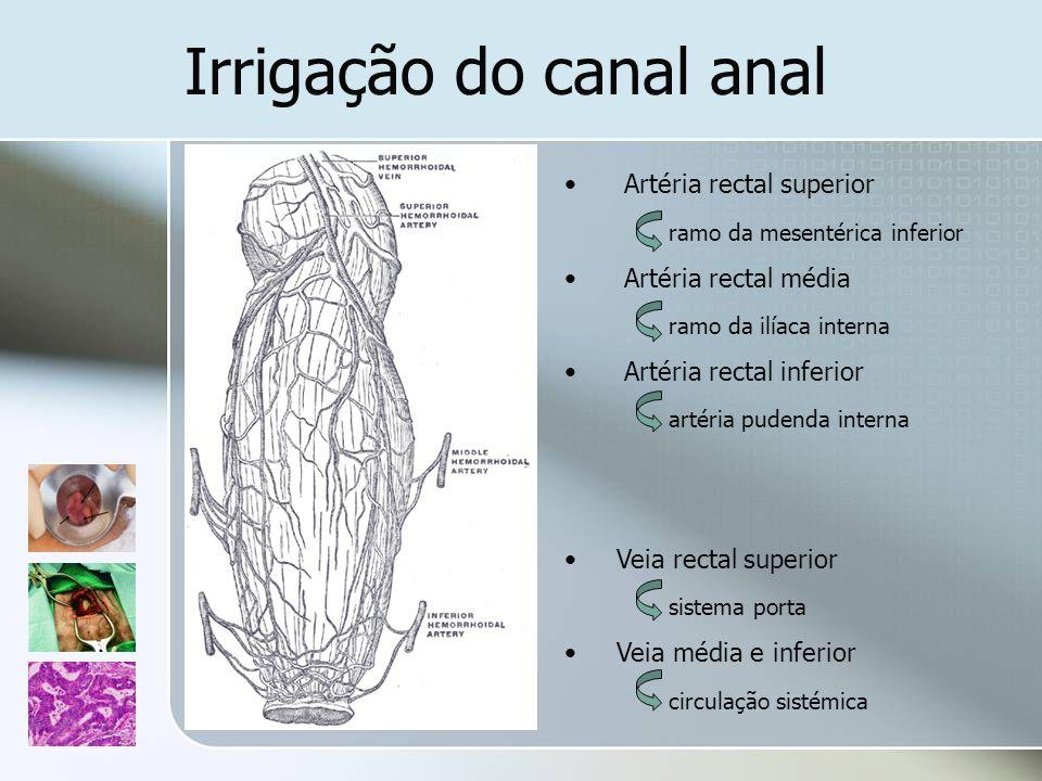 Irrigação do canal anal Artéria rectal superior ramo da mesentérica inferior Artéria rectal média ramo da ilíaca interna Artéria rectal inferior artér